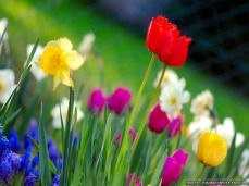 spring-time-2-wallpapers-1024x768